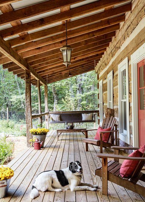 Wood, Flowerpot, Dog, Carnivore, Hardwood, Dog breed, Home, Door, Floor, Ceiling,