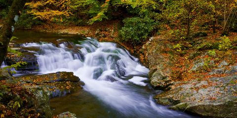 Body of water, Nature, Natural landscape, Natural environment, Water resources, Stream, Landscape, Leaf, Watercourse, Creek,