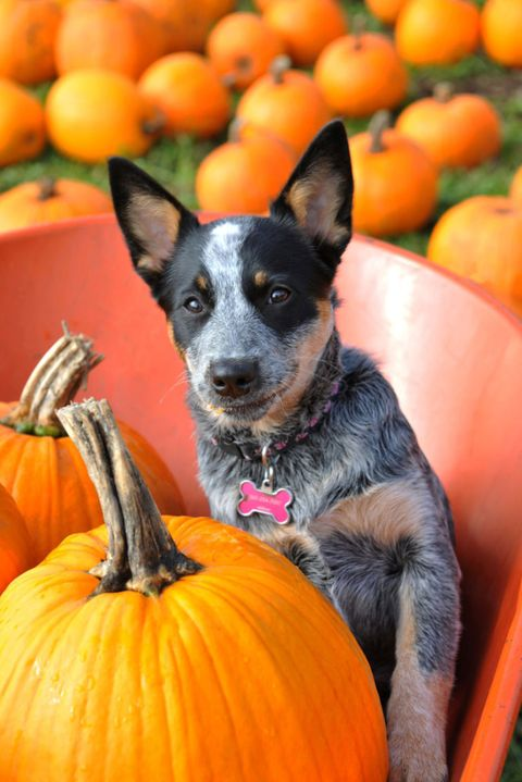 Dog breed, Dog, Orange, Carnivore, Vertebrate, Produce, Natural foods, Whole food, Local food, Vegan nutrition,