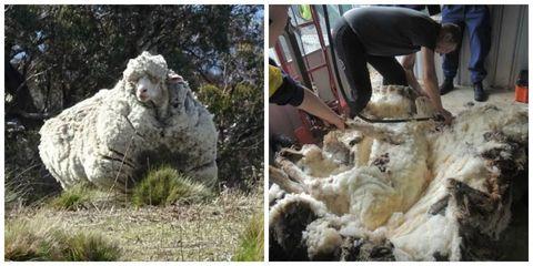 Human, Nature, Photograph, Adaptation, Soil, Geology, Fur, Natural material, Sheep, Sheep,