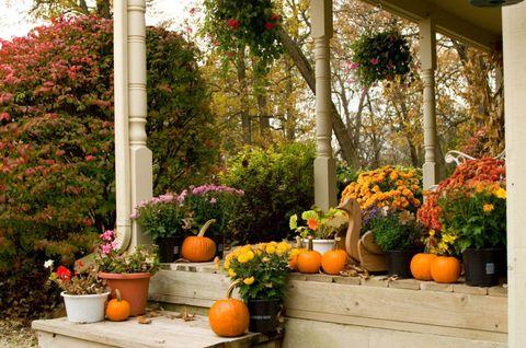 Plant, Squash, Flowerpot, Calabaza, Orange, Flower, Garden, Pumpkin, Vegetable, Winter squash,