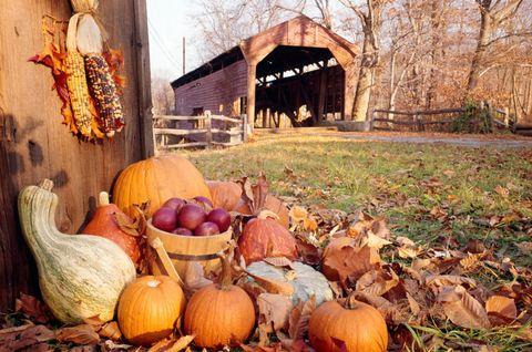 Squash, Calabaza, Produce, Vegetable, Natural foods, Local food, Leaf, Pumpkin, Winter squash, Vegan nutrition,