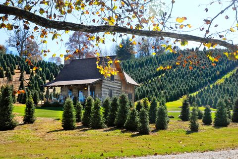 Tree, Shrub, House, Evergreen, Garden, Roof, Twig, Cottage, Groundcover, Home,