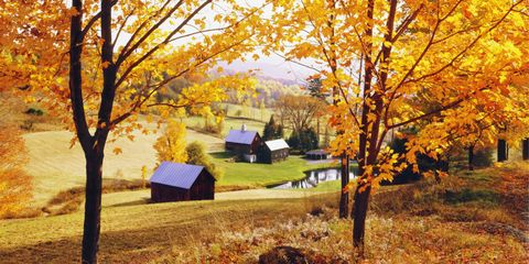 Deciduous, Branch, Leaf, Autumn, Tree, Landscape, Twig, Natural landscape, Amber, Tints and shades,