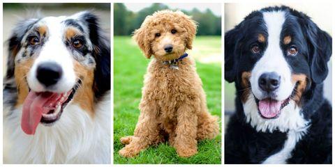 Dog breed, Dog, Vertebrate, Green, Organism, Carnivore, Mammal, Iris, Tooth, Sporting Group,