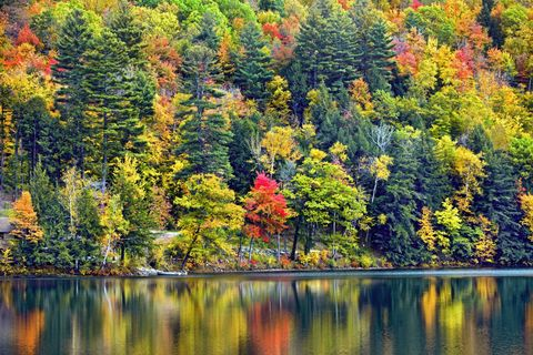 Nature, Vegetation, Natural landscape, Leaf, Reflection, Landscape, Bank, Deciduous, Woody plant, Nature reserve,