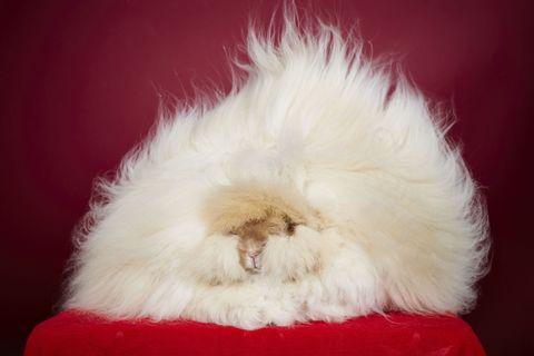 Fur, Snout, Natural material, Animal product, Fur clothing,