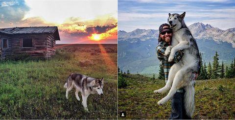 Vertebrate, Carnivore, Sled dog, Jaw, Dog, Wolf, Rural area, Wilderness, Grassland, Canis,