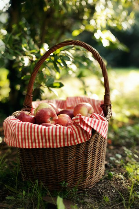 Basket, Picnic basket, Wicker, Grass, Home accessories, Flower girl basket, Plant, Picnic, Storage basket, Apple,