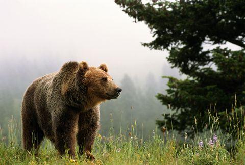 Bear in Colorado