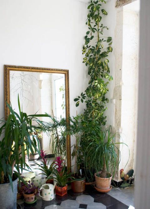 Flowerpot, Plant, Interior design, Houseplant, Botany, Annual plant, Herbaceous plant, Plant stem, Herb, Pottery,