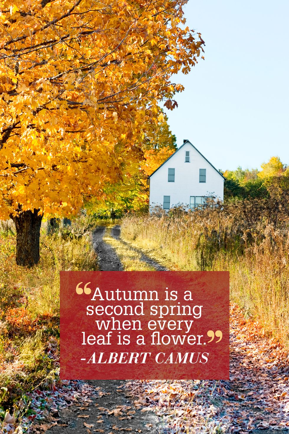 Country Life Quotes And Sayings Famous Inspirational Quotes  Famous Quotes About Life