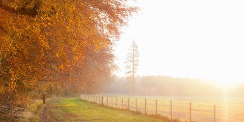 Nature, Natural landscape, Branch, Atmospheric phenomenon, Atmosphere, Leaf, Tree, Landscape, Deciduous, Mist,