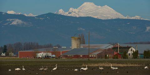 Mountainous landforms, Bird, Mountain range, Highland, Mountain, Summit, Water bird, Ridge, Rural area, Hill,