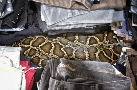 Reptile, Snake, Pattern, Adaptation, Scaled reptile, Terrestrial animal, Tan, Python, Burmese python, Wildlife,