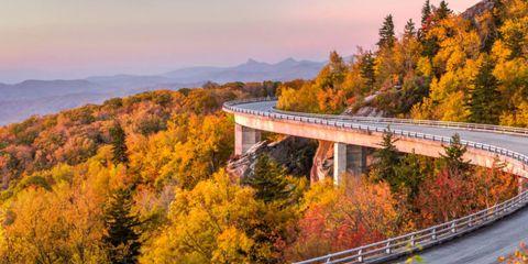 Nature, Leaf, Bridge, Tree, Natural landscape, Deciduous, Guard rail, Autumn, Concrete bridge, Girder bridge,