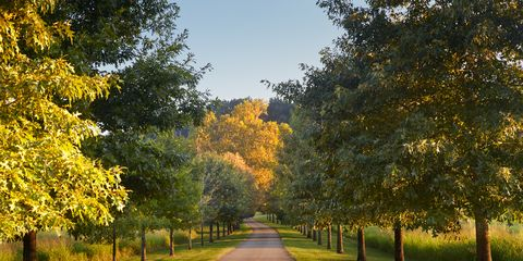 Nature, Branch, Yellow, Green, Deciduous, Leaf, Tree, Woody plant, Sunlight, Walkway,