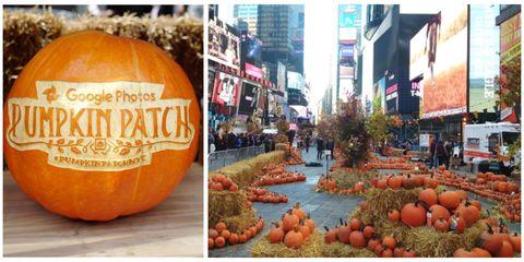 Squash, Local food, Produce, Natural foods, Vegetable, Calabaza, Whole food, Winter squash, Orange, Pumpkin,