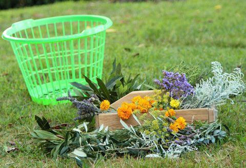 Grass, Flower, Flowering plant, Garden, Groundcover, Shrub, Grass family, Lavender, Herbaceous plant, Annual plant,
