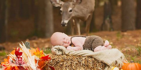 Baby & toddler clothing, Comfort, Fawn, Terrestrial animal, Baby, Peach, Toy, Love, Doll, Basket,