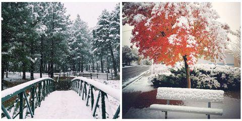 Nature, Branch, Photograph, Winter, Leaf, Deciduous, Woody plant, Snow, Freezing, Trunk,