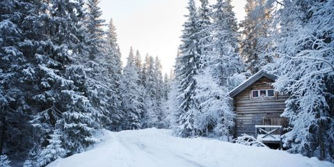 Winter, Branch, Freezing, Tree, Snow, Woody plant, House, Forest, Spruce-fir forest, Twig,