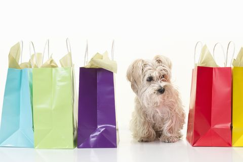 Small dog with gift bags