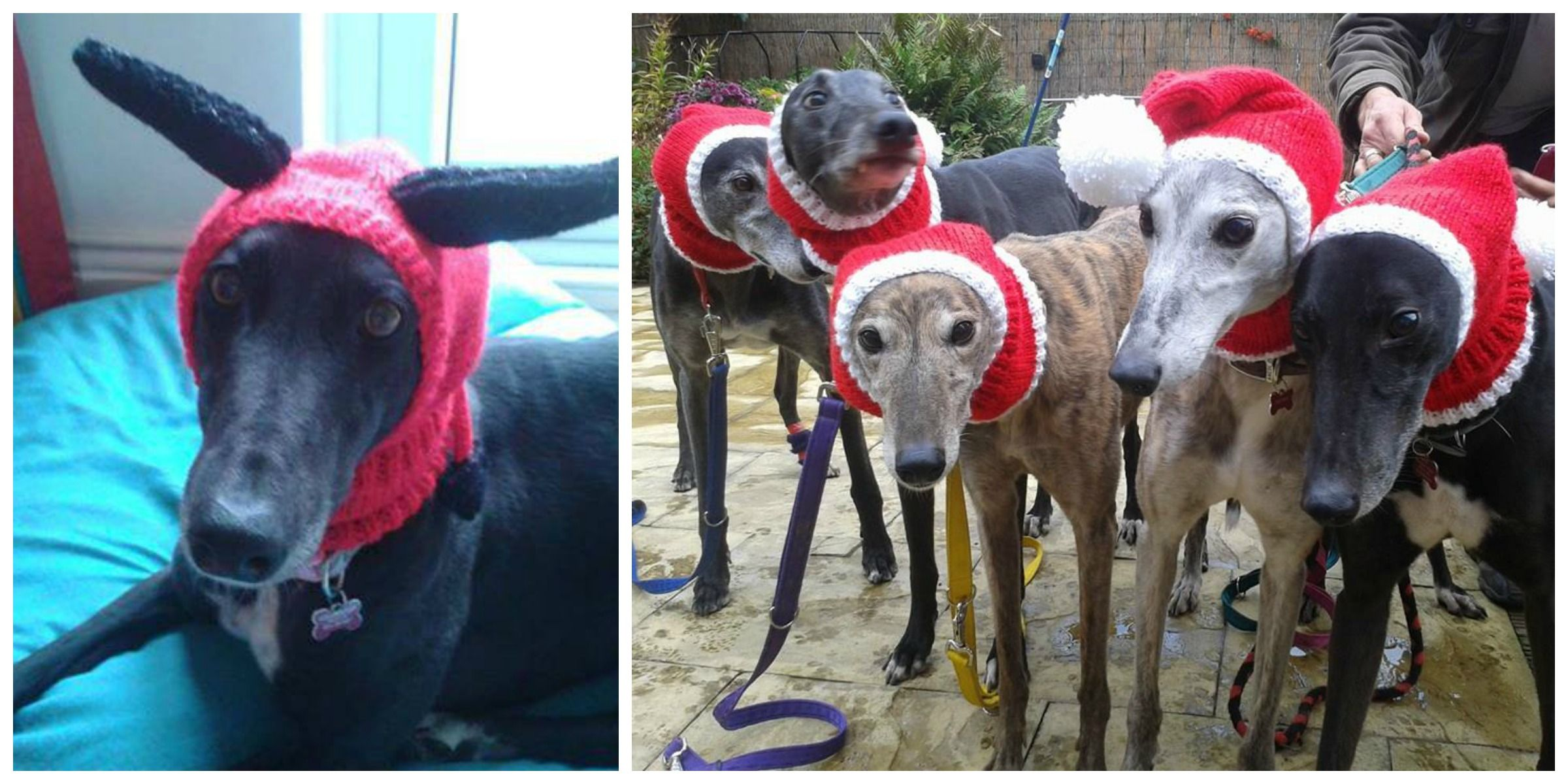 Sweaters For Homeless Greyhounds - Jan Brown Knitted With Love