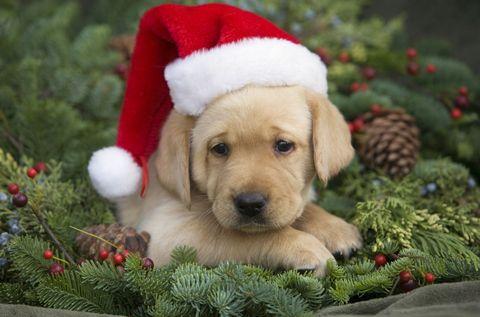 cute christmas puppies cute baby animal photos