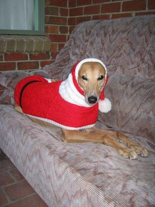 Sweaters For Homeless Greyhounds Jan Brown Knitted With Love