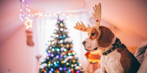 Lighting, Event, Christmas decoration, Interior design, Christmas ornament, Christmas eve, Winter, Christmas tree, Dog, Interior design,