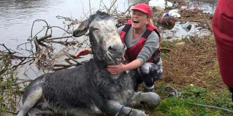 Human, Vertebrate, Interaction, Working animal, Fur, Livestock, Sheep, Pack animal, Sheep, Wildlife biologist,