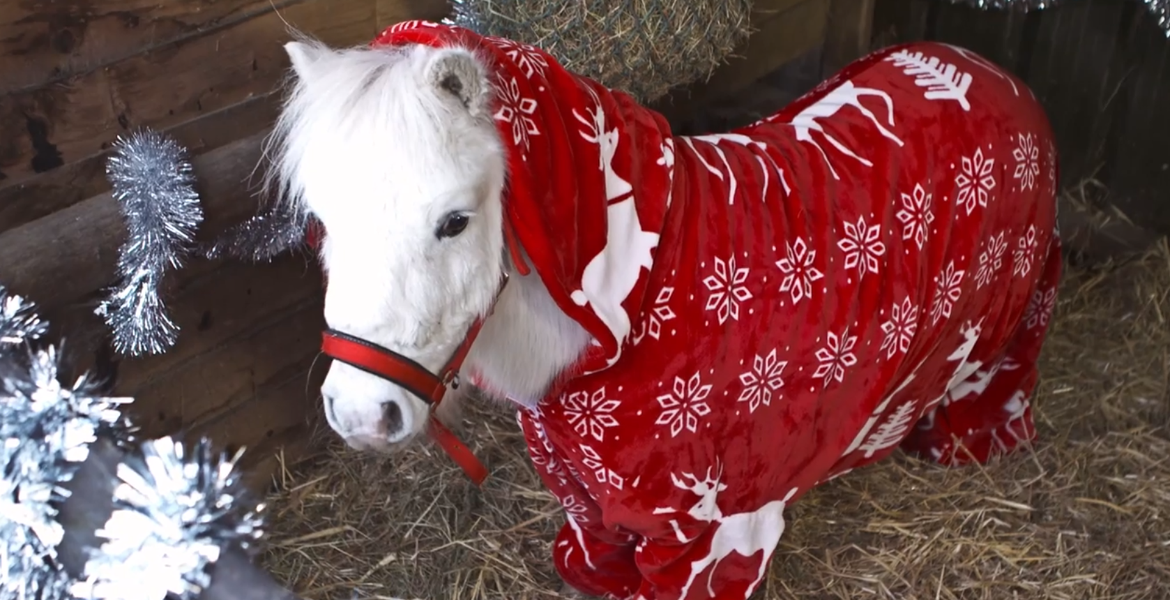 Now Horses Can Bundle Up In Ridiculously Cute Christmas Onesies, Too