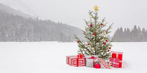 Winter, Branch, Christmas decoration, Freezing, Woody plant, Holiday, Snow, Christmas tree, Christmas, Evergreen,