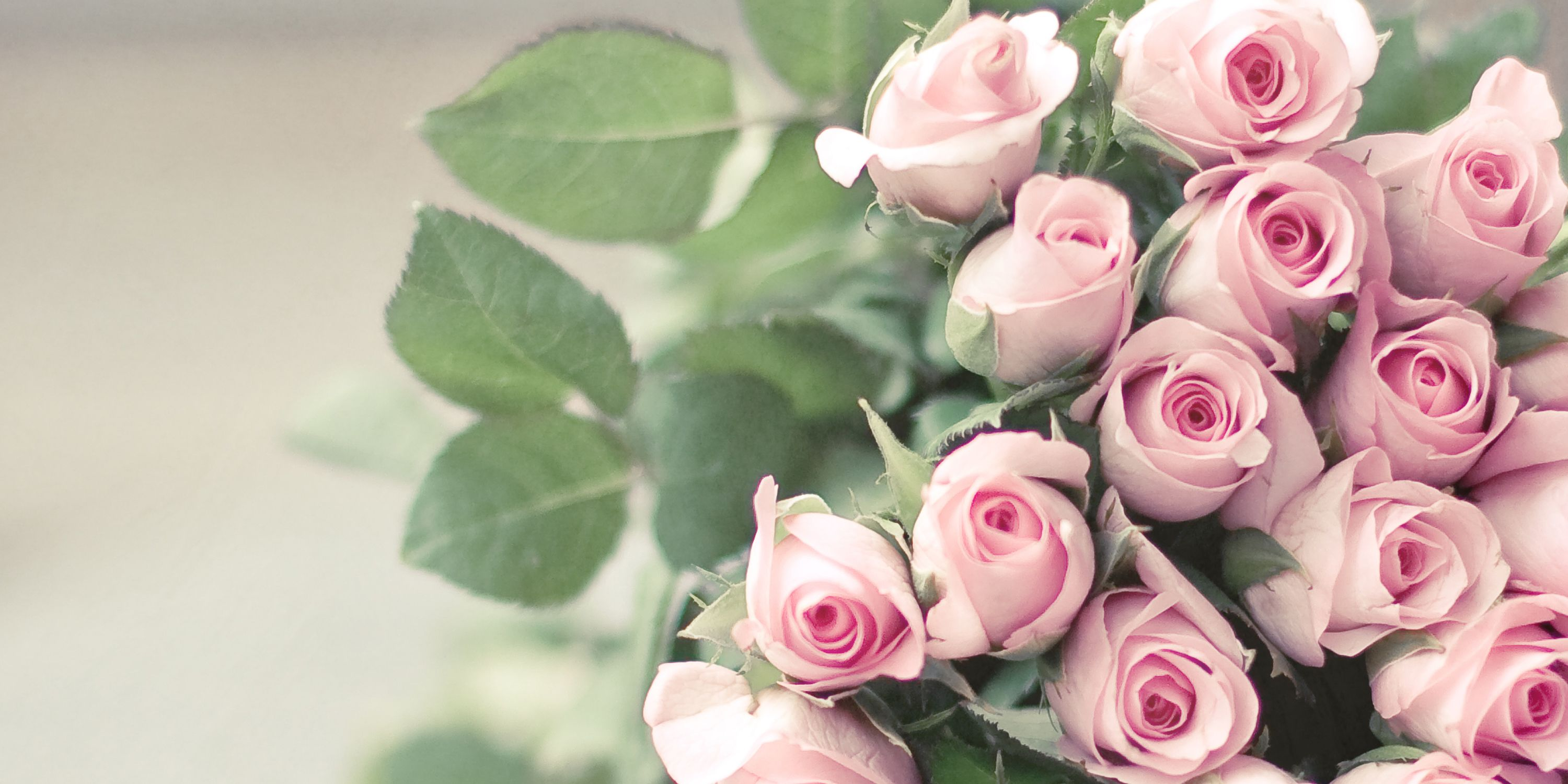 12 Flowers and Their Meanings - Valentine\'s Day Flower Color ...