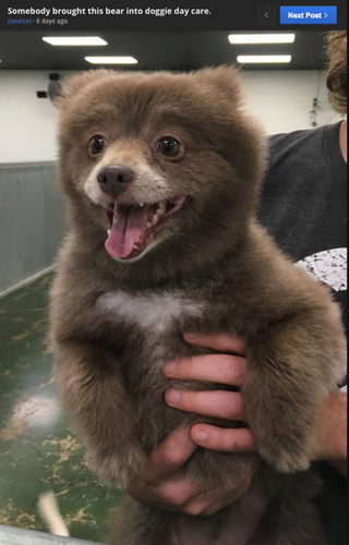 Is This Adorable Creature A Puppy Or A Baby Bear
