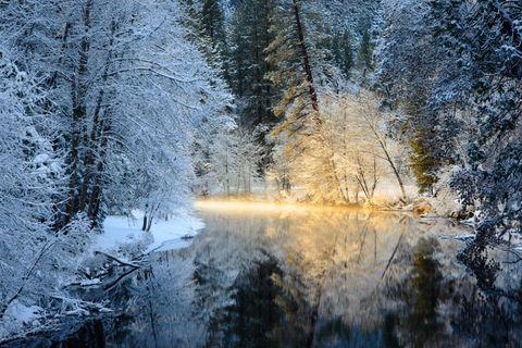 Nature, Branch, Winter, Natural landscape, Woody plant, Sunlight, Atmospheric phenomenon, Freezing, Reflection, Morning,