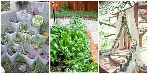 Plant, Leaf, Garden, Herb, Leaf vegetable, Groundcover, Annual plant, Backyard, Yard, Herbaceous plant,