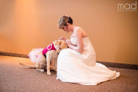 Human, Dress, Flooring, Sitting, Carnivore, Bridal clothing, Dog, Flash photography, Gown, Peach,