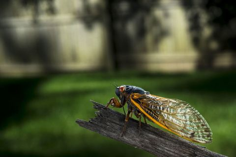 Invertebrate, Insect, Arthropod, Wing, Net-winged insects, Cicada, Pest, Wildlife, Macro photography, Water feature,