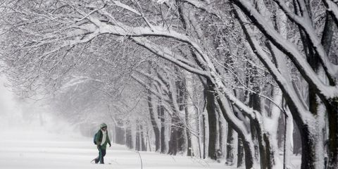 Winter, Branch, Freezing, Atmospheric phenomenon, People in nature, Twig, Snow, Woody plant, Slope, Trunk,