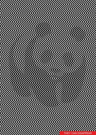 Panda Optical Illusion Zig Zag Lines Can You Find The Panda In