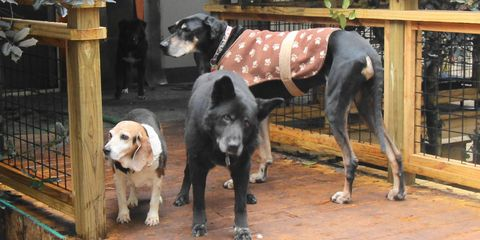 Tennessee Sanctuary Shelters Elderly Dogs — Old Friends