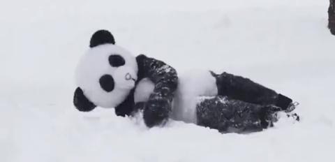 Panda, Toy, Organism, Photograph, White, Stuffed toy, Style, Terrestrial animal, Black, Snow,