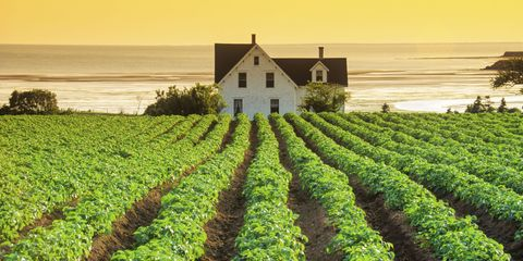 Agriculture, Farm, Field, Plantation, Land lot, House, Rural area, Crop, Groundcover, Soil,
