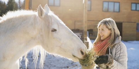 Window, Vertebrate, Horse, Mammal, Facial expression, Working animal, Jaw, Interaction, Organ, Snout,