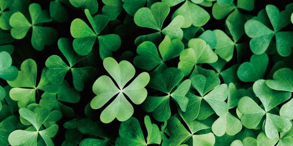 Finding A Four Leaf Clover Saint Patrick S Day Trivia