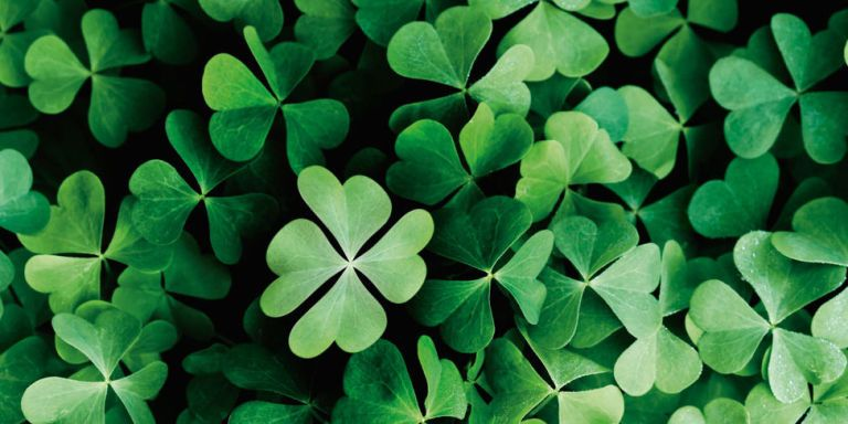 is finding a four leaf clover rare So why are four-leaf clovers lucky though they are a distinctly-irish tradition, four-leaf in march, finding a four-leaf clover is hardly a stroke of luck.