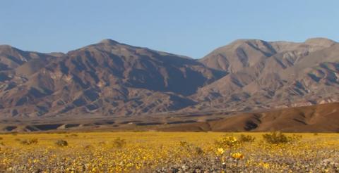 Mountainous landforms, Plant community, Landscape, Mountain, Hill, Ecoregion, Wildflower, Wilderness, Geology, Grassland,