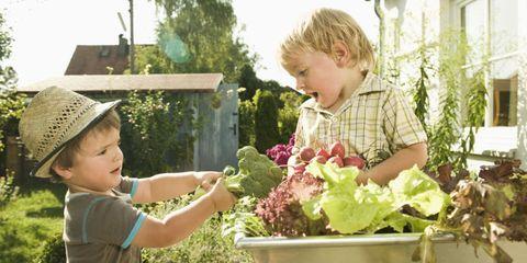 Human, Ear, Child, Garden, Toddler, Leaf vegetable, Produce, Baby & toddler clothing, Annual plant, Gardening,